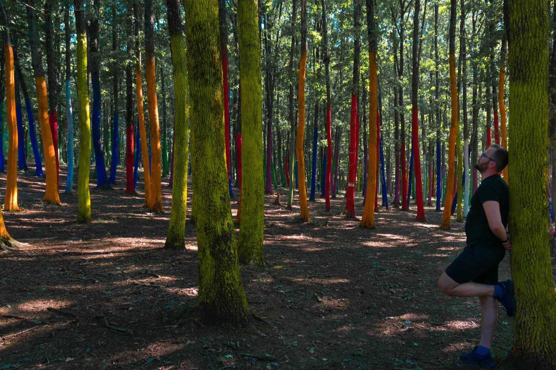Targu Jiu Transalpina padure colorata