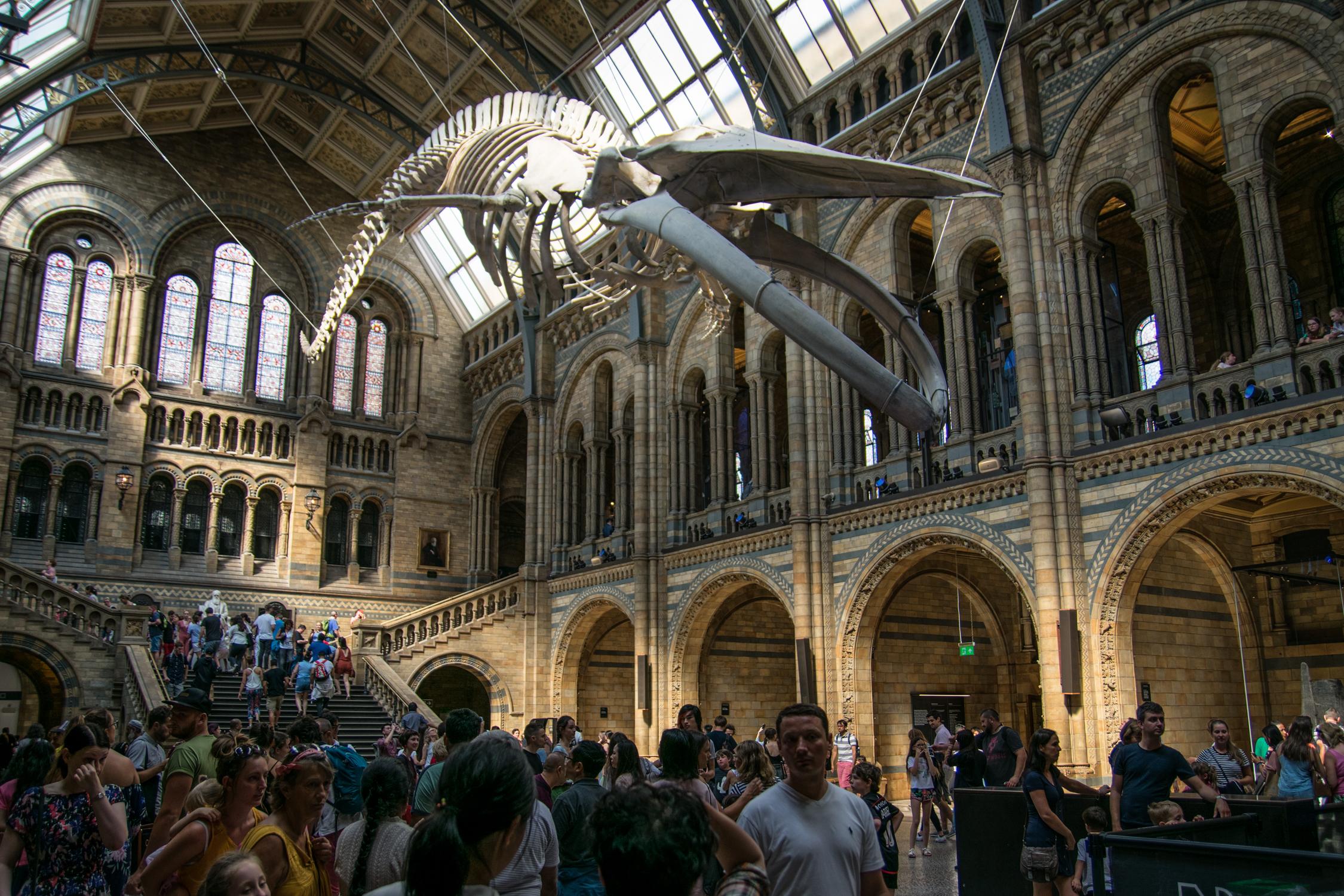 National History Museum Dinosaurs Londra