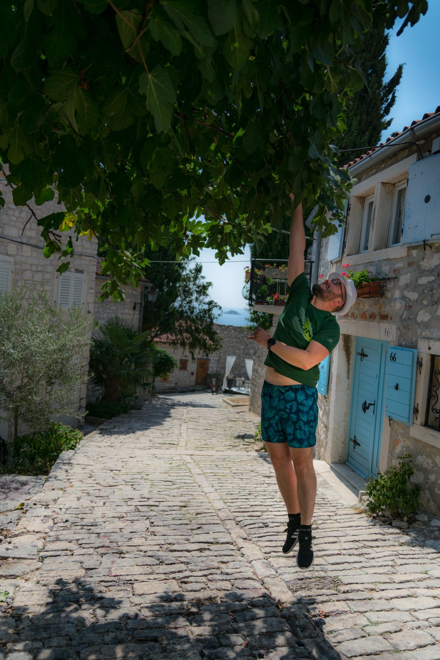 Rovinj Croatia Istria Figs