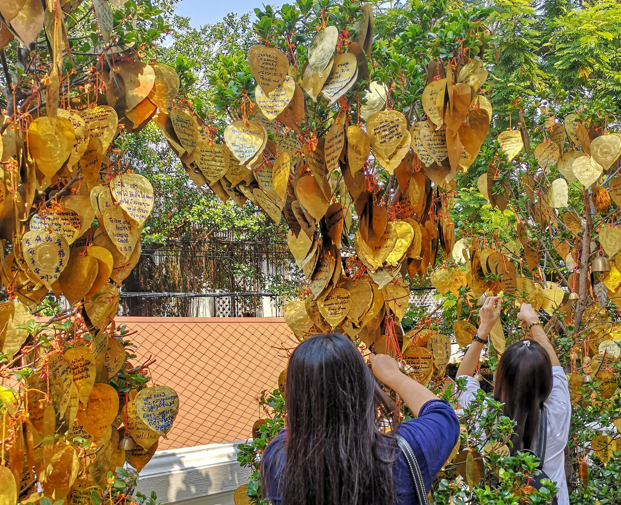 bangkok golden mountain leafs