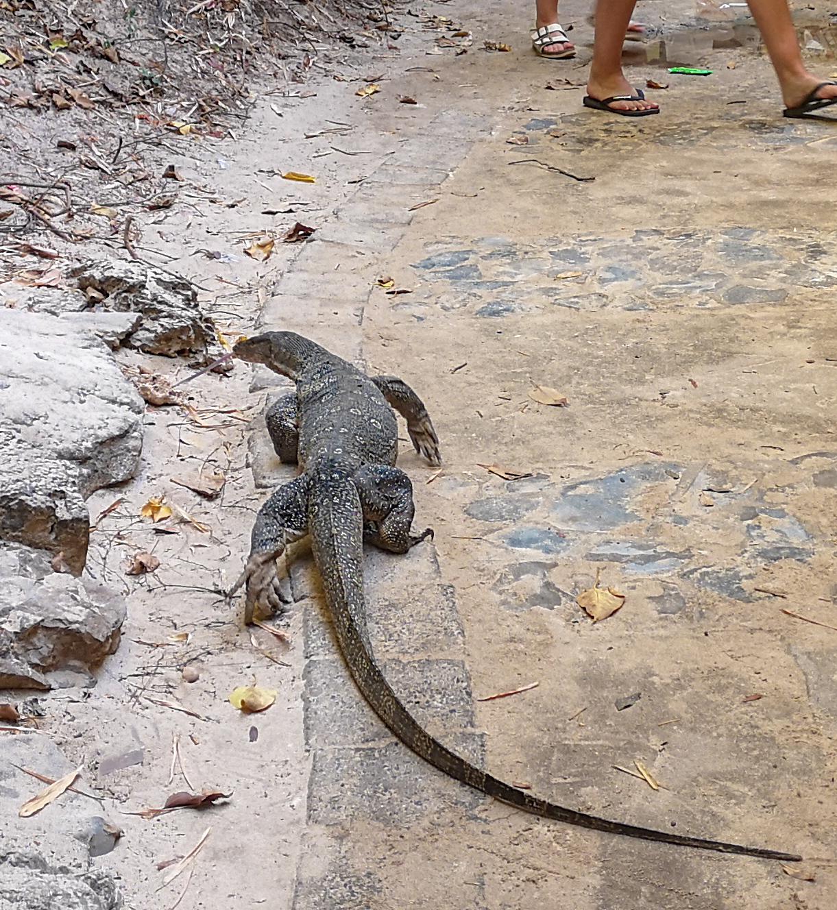 thailand lizard